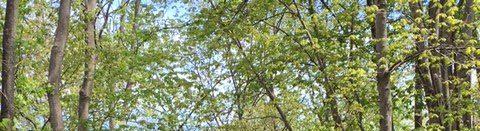 cropped-IMG_1648-1-e1463024650134.jpg
